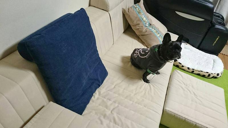しっかり座面で腰にやさしいつみきソファ。 に、座る愛犬の表情もほっこりしてます♪【国産ローソファ・フロアソファ専門店HAREM】