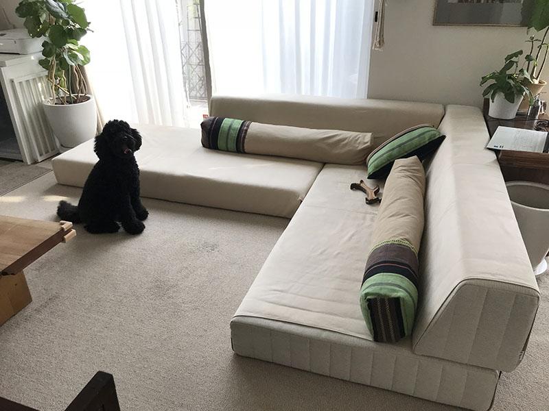 人も愛犬もみんなでくつろげる、座面高20cmのローソファ。【国産ローソファ・フロアソファ専門店HAREM】