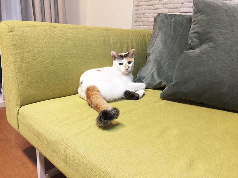 猫ちゃんもまったり、くつろぎ。 フラットなデザインでお洒落なローソファ【国産ローソファ・フロアソファ専門店HAREM】