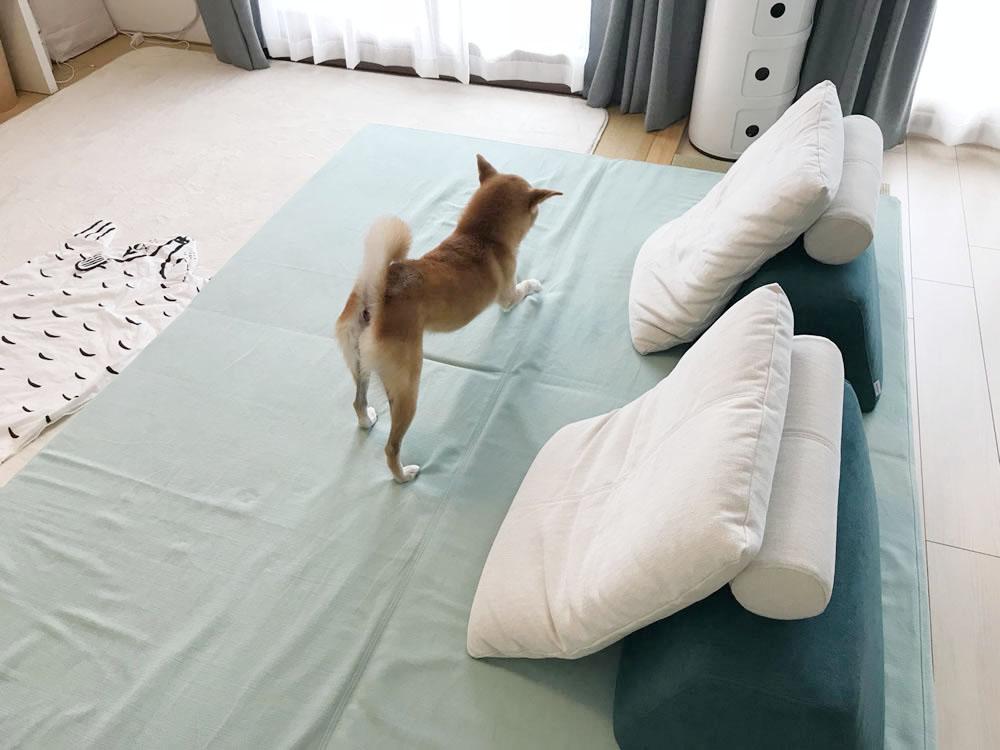フロアソファ、フロフロの上で遊ぶ愛犬