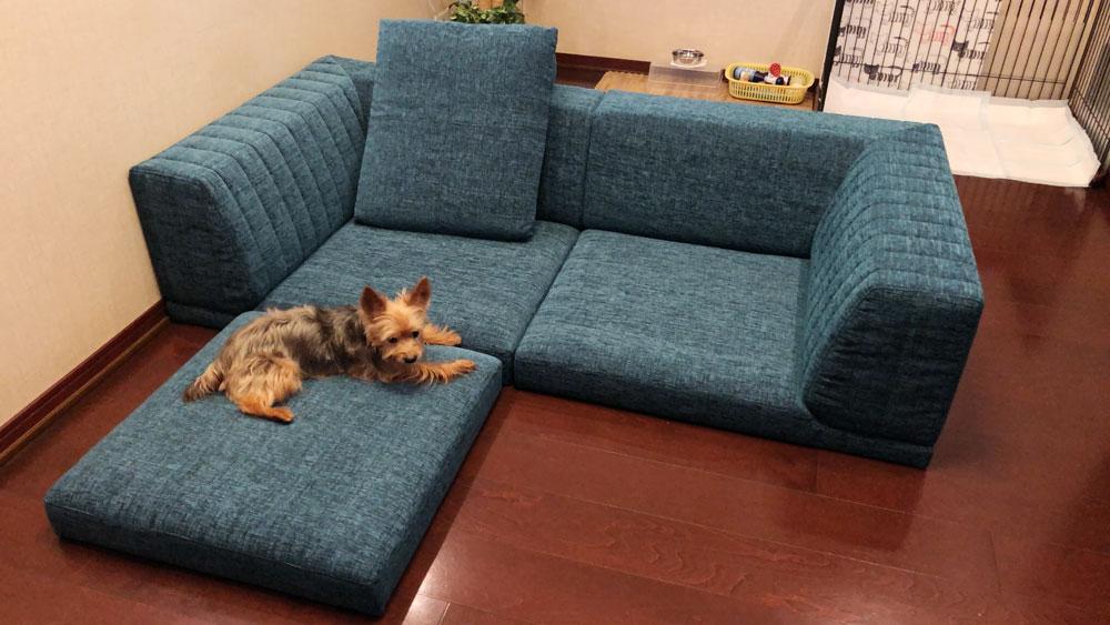 愛犬の足腰にもやさしい、とっても低いローソファ。【国産ローソファ・フロアソファ専門店HAREM】