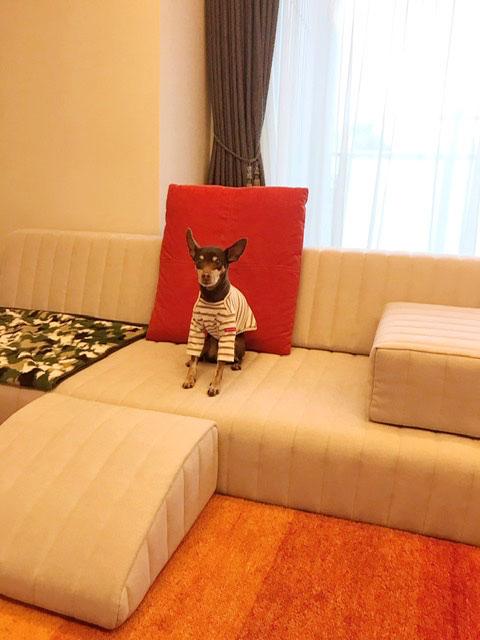 つみきソファなら、愛犬との距離が近くなる♩【国産ローソファ・フロアソファ専門店HAREM】