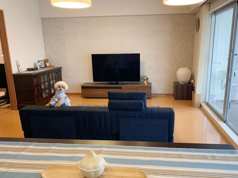 ペットイベントで愛犬に優しいソファを見つけよう!【国産ローソファ・フロアソファ専門店HAREM】