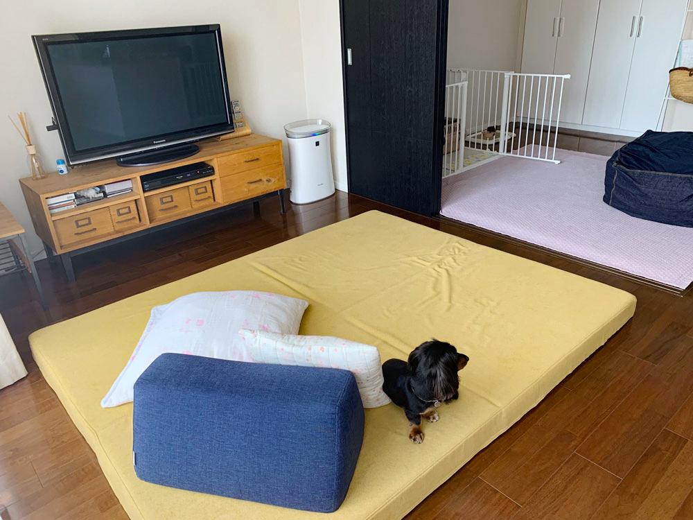 愛犬の足腰に負担の少ない、床のようなフロアソファ。【国産ローソファ・フロアソファ専門店HAREM】