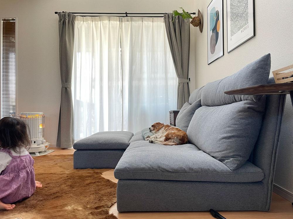 犬も人も眠りたくなる 安心感抜群のローソファ【国産ローソファ・フロアソファ専門店HAREM】
