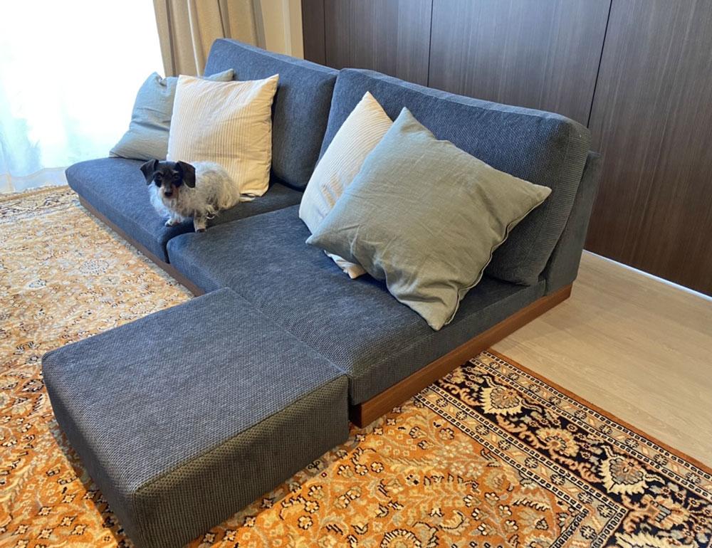 座面が低いから愛犬の足腰にもやさしい。【国産ローソファ・フロアソファ専門店HAREM】