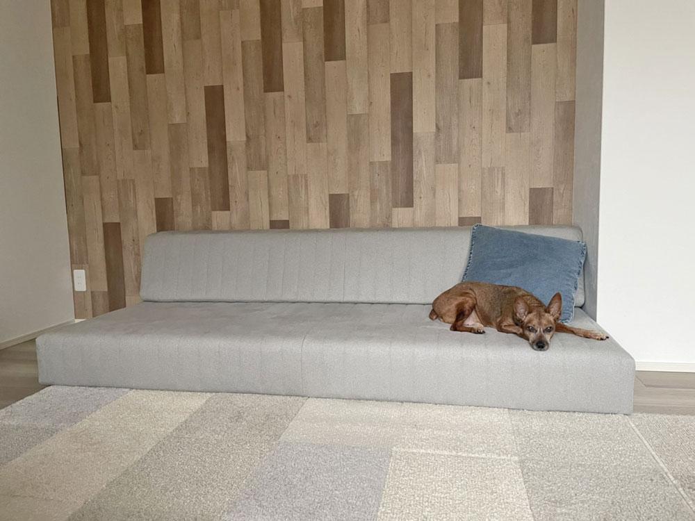 わんちゃんもくつろぎやすい低さ&安定感のソファ。【国産ローソファ・フロアソファ専門店HAREM】